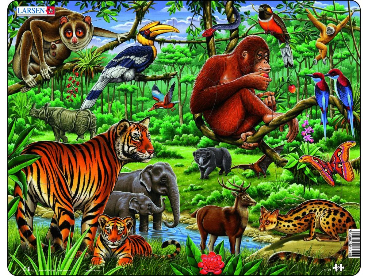 Larsen les animaux de la jungle d 39 asie - Jeux des as de la jungle ...