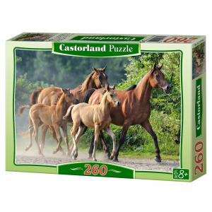 Castorland - 27194 - Puzzle 260 pièces - Pur-sang Arabes (207654)