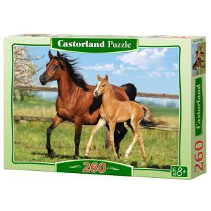 Castorland - 27064 - Puzzle 260 pièces - Jument et poulain (259456)