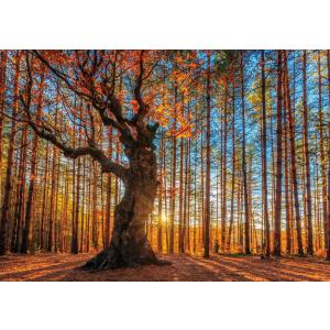 WentWorth - 640101_W - Puzzle 250 pièces - The King ofhe Forest (266482)