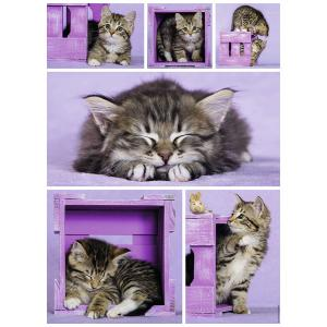 Nathan puzzles - 87227 - Puzzle 500 pièces - Nathan - Chatons mignons (306336)