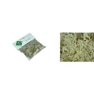 Aedes Ars - 2404A - MUSGO POLAR , sachet de 25 grammes (318776)