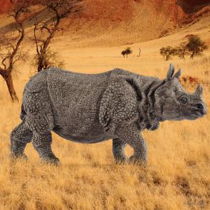 Schleich - 14816 - Figurine Rhinocéros indien 13,9 cm x 4,4 cm x 6,7 cm (369570)