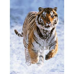 Ravensburger - 14475 - Puzzle 500 pièces - Tigre dans la neige (379908)