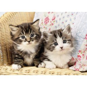 Nathan puzzles - 86766 - Puzzle 100 pièces - Nathan - Duo de chatons (380264)