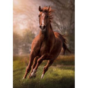 Clementoni - 31811 - Puzzle 1500 pièces - The Horse (410448)