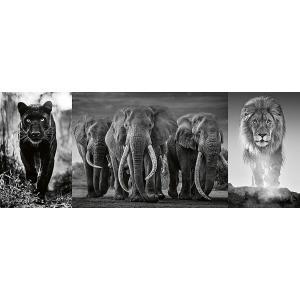 Ravensburger - 16729 - Puzzle 1000 pièces - Panthère, éléphant, lion (Triptyque) (461376)